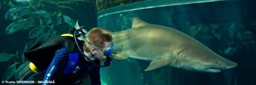 visite-exposition_permanente-aquarium_des_requins-.jpg